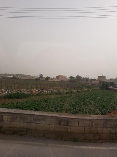 Bussi aknast vaade põllumajandusele, kartuli põld